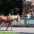 Stock Video: Children ride in red cart with one brown horse, behind people at Moscow Zoo