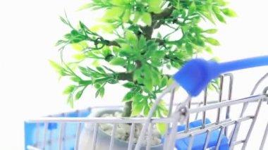 Artificial ornamental plant in flowerpot inside shopping trolley — Stock Video