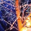 Snowy birch and garland of yellow lamps in winter night forest — Stock Video