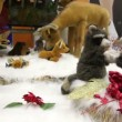 Group of moving plush toy animals on artificial snow — Stock Video