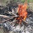 Stock Video: Bonfire of branches burns on grass
