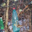 Bird feeder hang on branch in winter and tits eat — Stock Video