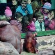 Children watch on female orangutwith baby sit in front of fencing glass in Moscow ZOO — Stock Video #29834321