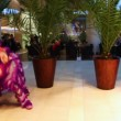 Lion dance performed by Chinese actors in hotel hall — Stock Video