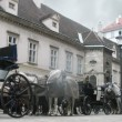 Horse-driven carriage stands at Hofburg palace near with Stephansdom in Vienna — Stock Video