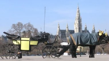 Horse-driven carriage stand on street in front of Rathaus — Stock Video