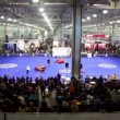 Crowd watch dog agility in large exhibition hangar — Stock Video