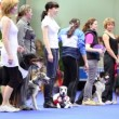 Several women stand with their dogs on leashes at International Dog Show Eurasia 2011 — Stock Video