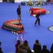 Woman lead her dog during agility at International Dog Show Eurasia 2011 — Stock Video
