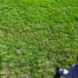 Stock Video: Little boy walk backward by grass plot, and then return