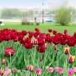 People walk near pond in city, focus is on flowerbed at foreground — Stock Video