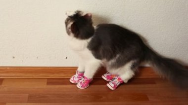 Cat in pink shoes sits on floor and then jumps — Stock Video