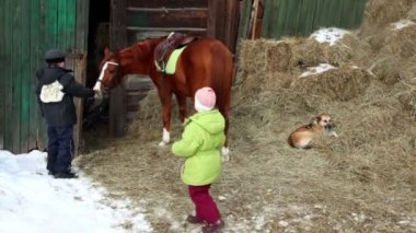 Boy feed horse, his sister give hay to horse, dog lies on haystack — Stock Video