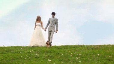 Groom and bride go keeping for hands downwards on meadow, terrier nearby runs — Stock Video
