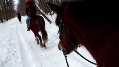 Woman ride horseback in forest at winter day — Stock Video
