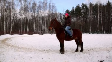 Woman sit on horse back in forest — Stock Video