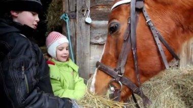 Zwei kinder junge und mädchen feed pferd, nahaufname — Stockvideo