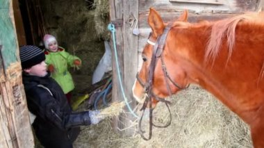 Boy feed horse, his sister give hay to horse — Stock Video