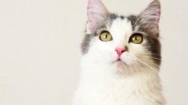 Cat look around follow something, closeup — Stock Video