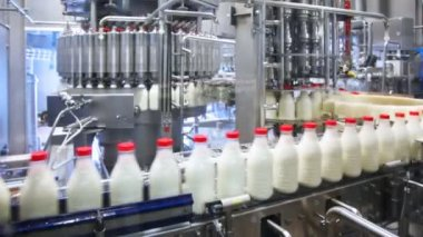 Fresh milk poured into bottles, screwed red caps and send to consumers — Stock Video