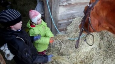 Boy and girl feed horse — Stock Video