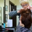 To woman do in hairdressing salon hairdress and comb hair — Stock Video #30717323