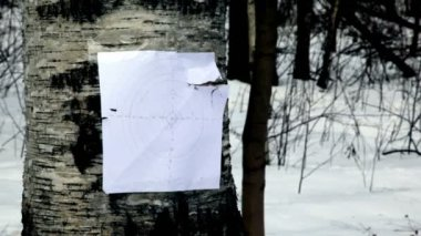 Bullet hit paper shooting mark on birch — Stock Video