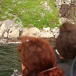 Stock Video: Heads of tourists on ship which stand near coast at fiord