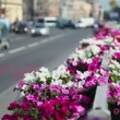 Stock Video: Flower bed at dividing strip on road with city traffic