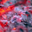 Stock Video: Flicker of smoldering embers lay in ashes