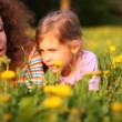 Mother and daughter talk lying on lawn with dandelions — 图库视频影像