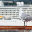 Stock Video: Mew sits on handrail in port with cruise ship at sunny day