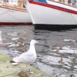 Stock Video: Two seagulls stand on pier near white sailing boats