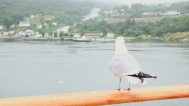 Gull sits on handrail and then flies away at fiord with village — Vídeo Stock