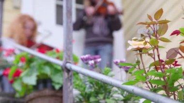 在乡间别墅前的玫瑰花丛,女孩玩小提琴 — 图库视频影像