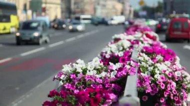 Flower bed at dividing strip on road with city traffic — Stock Video