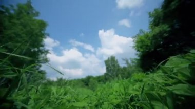 Grass field under blue sky with clouds, motion close to ground — Stock Video