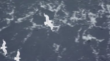 Several gulls flap and fly under water surface — Stock Video