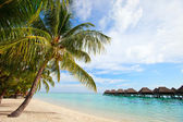 Perfect beach on Moorea — Stock Photo