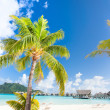 Beautiful beach on Bora Bora - Stock Photo