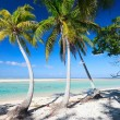 Perfect tropical beach - Zdjęcie stockowe