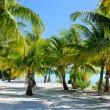 Постер, плакат: Palm trees at beach