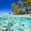 Tropical island above and underwater — ストック写真