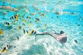 Bora Bora underwater — Stock Photo