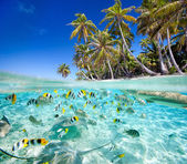 Tropical island above and underwater — Foto de Stock