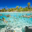 Tropical island above and underwater — Stock Photo
