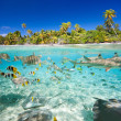 Tropical island above and underwater — Stock Photo #15337397