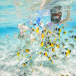 Woman snorkeling with fish — Stock Photo #15338993