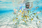 Woman snorkeling with fish — Stock Photo