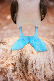 Feet of blue footed booby — Stock Photo